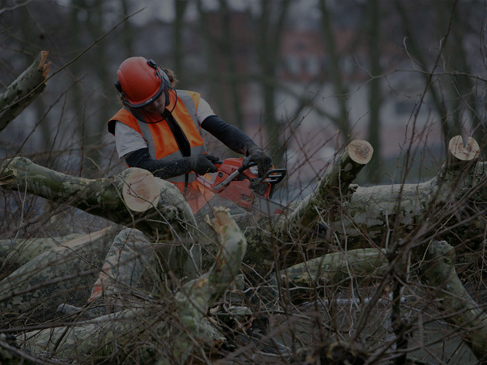Jonesville Tree Removal