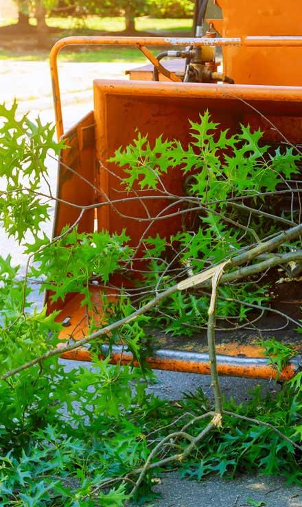 J.W. Lawncare Inc Tree Trimming